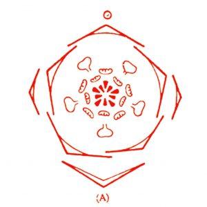 bloemdiagram Anemoon rood