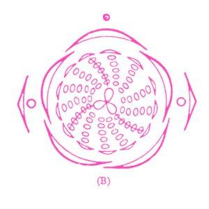 bloemdiagram Anemoon licht-roze
